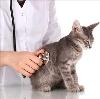 Ветеринарные клиники в Мариинском Посаде